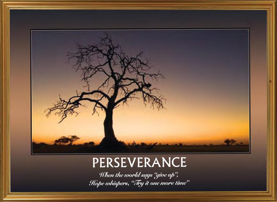 Trees - Perseverance