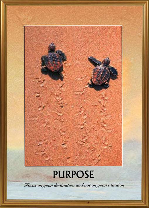 Turtles - Purpose