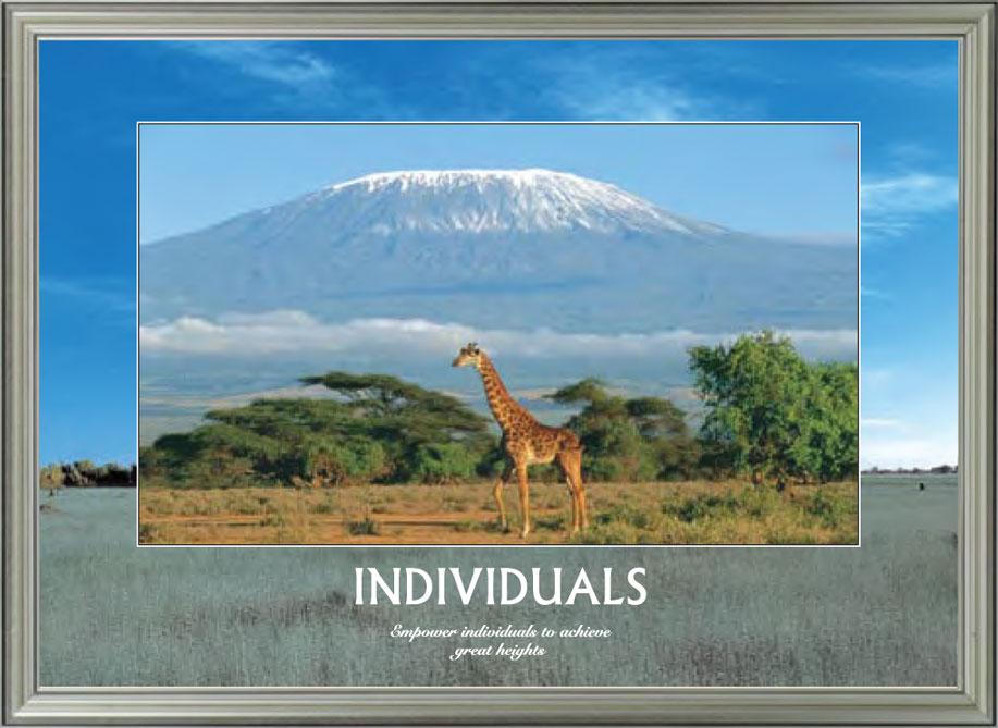 Giraffe - Individuals
