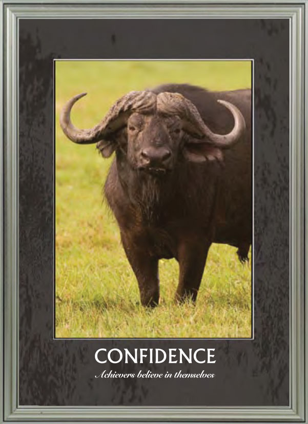 Buffalo - Confidence