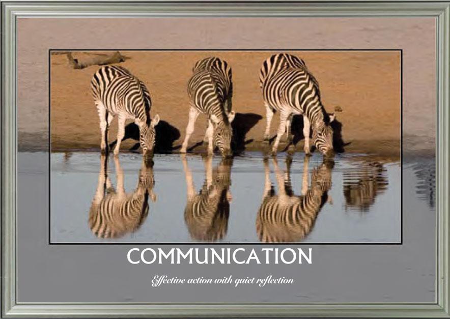 Zebras - Communication