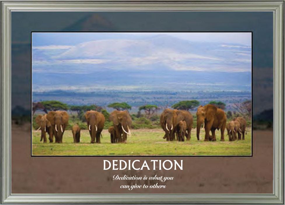 Elephants - Dedication