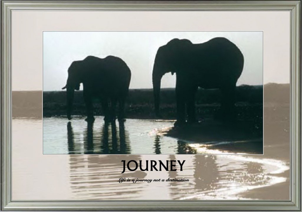 Elephants - Journey