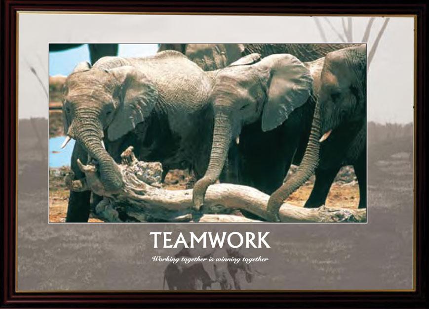 Elephants - Teamwork