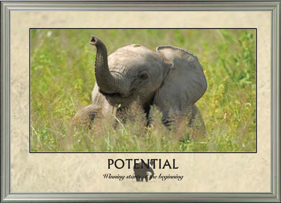 Baby Elephant - Potential