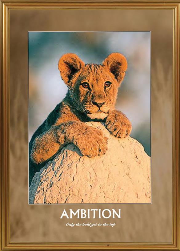 Lion - Ambition