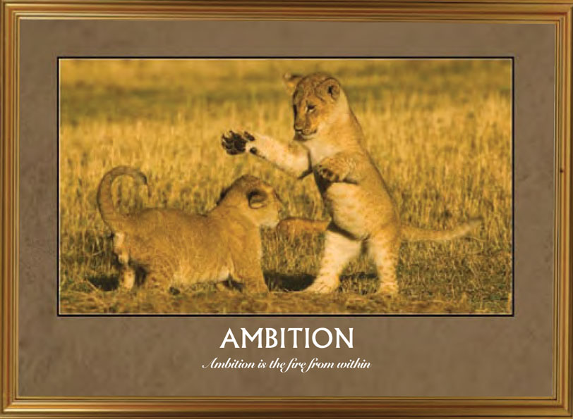 Lion Cubs - Ambition