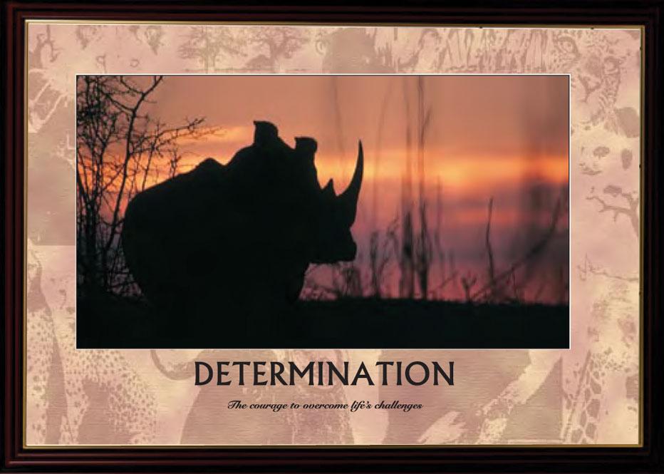 Rhino - Determination